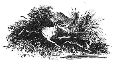 Mabinginoon hare.jpg